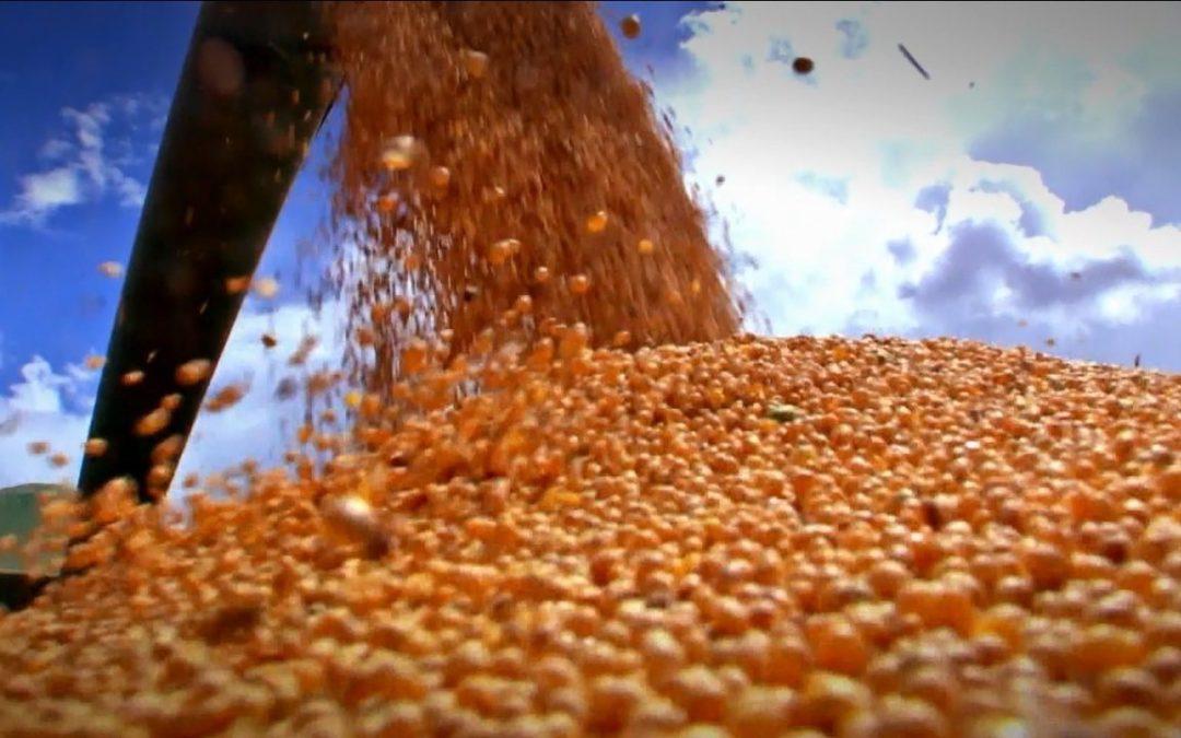 Lucratividade da soja está positiva no ano