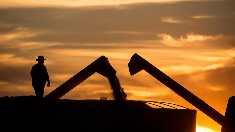 USDA: Embarques semanais de milho superam expectativas nos EUA, soja dentro do esperado