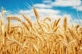 Índice de preços da FAO avança 1,2% em maio