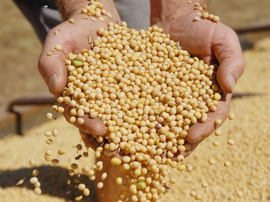Soja representa 16% das exportações brasileiras