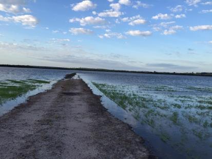 Chuvas no RS: Prejuízo chega a R$ 340 milhões para o arroz