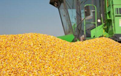 Safra de grãos no PR deve crescer 6%