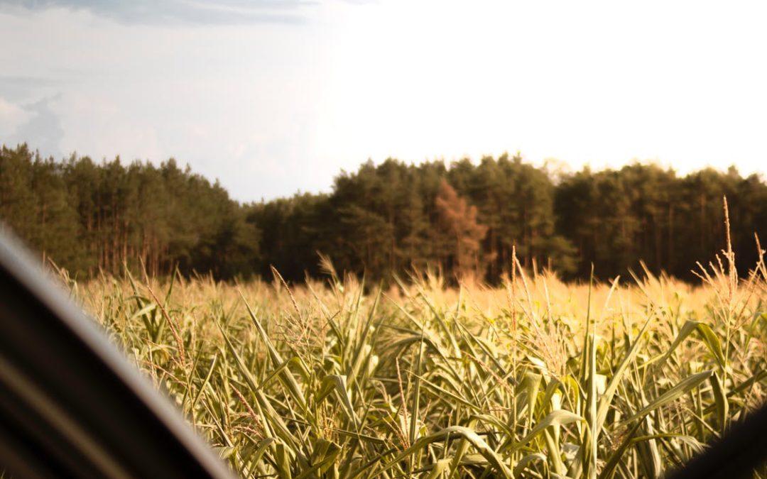 Incorporação de pastagens adicionará 10,3 milhões de hectares à área plantada nos próximos dez anos