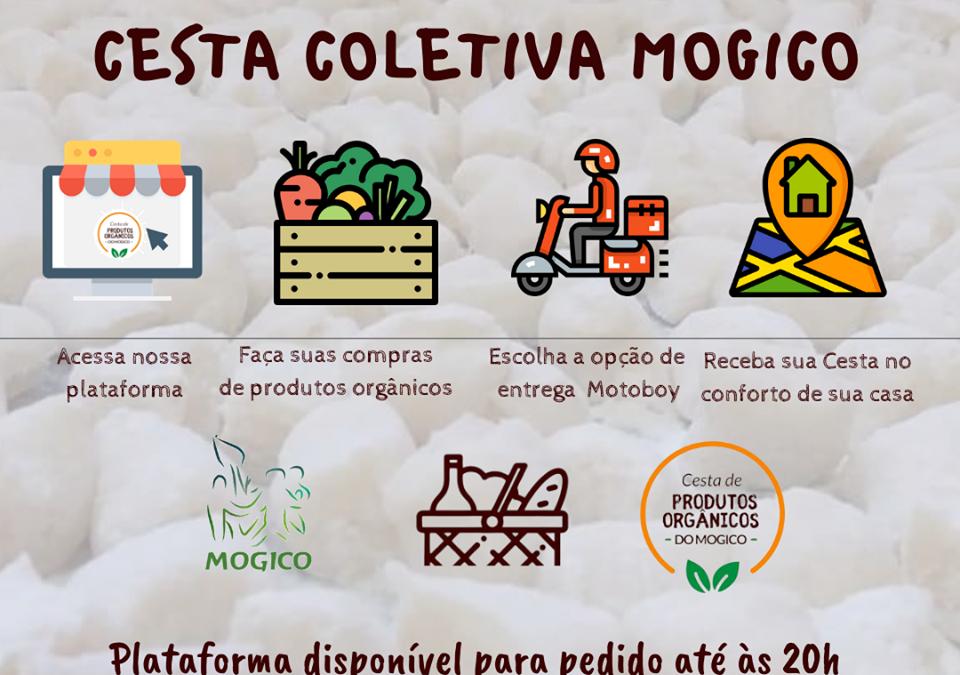 Produtores de Juiz de Fora (MG) criam plataforma para venda de cestas coletivas de hortifrutis