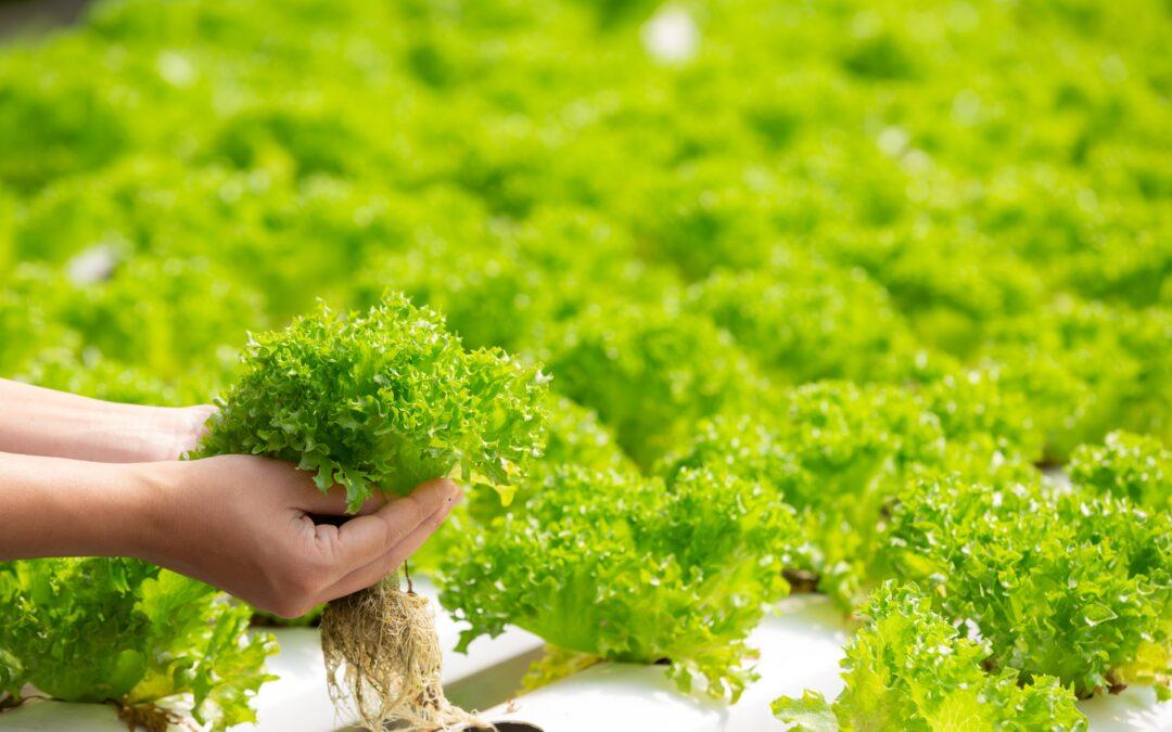Hidroponia reduz necessidade de utilização de defensivos agrícolas