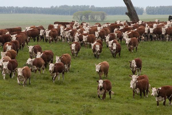 Estudo aponta que consumo de carnes está relacionado à capacidade produtiva