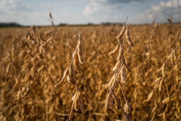 Farsul apresenta estudo sobre produções agrícolas convencionais e sem defensivos