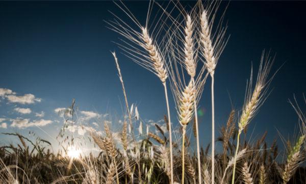 Farsul e Estado buscam solução para alíquota do ICMS de produtos agrícolas